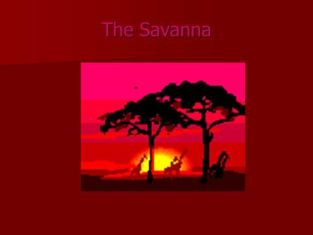 The Savanna. Average Rainfall The average rainfall for the Savanna is 20 to 47 inches per year.