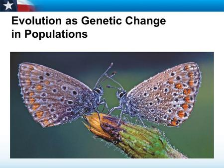 Evolution as Genetic Change in Populations. Learning Objectives  Explain how natural selection affects single-gene and polygenic traits.  Describe genetic.