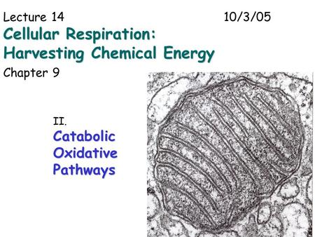1 Lecture 1410/3/05 Cellular Respiration: Harvesting Chemical Energy Chapter 9 II.CatabolicOxidativePathways.