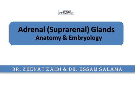Adrenal (Suprarenal) Glands Anatomy & Embryology.