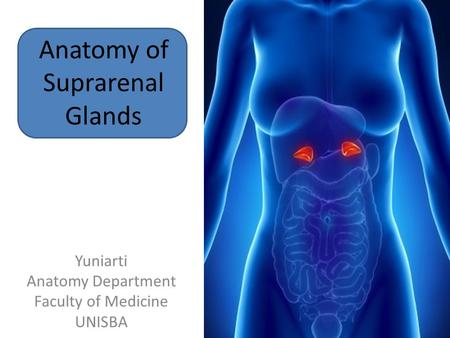 Anatomy of Suprarenal Glands Yuniarti Anatomy Department Faculty of Medicine UNISBA.