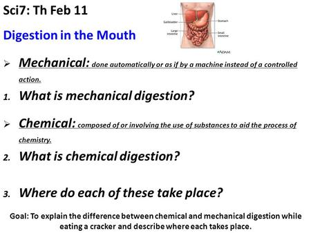 Goal: To explain the difference between chemical and mechanical digestion while eating a cracker and describe where each takes place. Sci7: Th Feb 11 In.