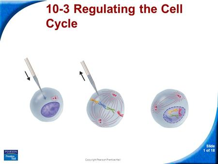 Slide 1 of 18 Copyright Pearson Prentice Hall 10-3 Regulating the Cell Cycle.