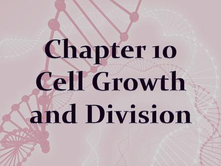 Limits to Cell Growth The larger a cell becomes, the more demands the cell places on its DNA and more trouble the cell has moving enough nutrients and.