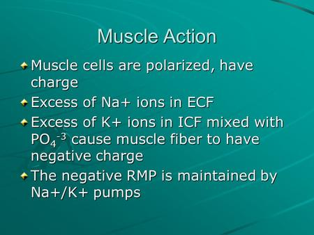 Muscle Action Muscle cells are polarized, have charge Excess of Na+ ions in ECF Excess of K+ ions in ICF mixed with PO 4 -3 cause muscle fiber to have.