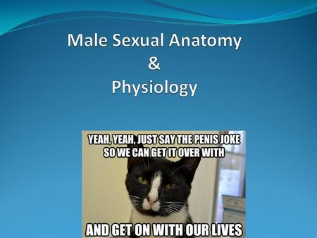 Male Sexual Anatomy & Physiology