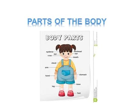 Body Systems All the parts of your body are composed of individual units called cells. Examples are muscle, nerve, skin (epithelial), and bone cells.