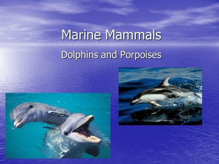 Marine Mammals Dolphins and Porpoises. Characteristics Dolphins and Porpoises are classified as toothed whales. They live in both fresh and saltwater.