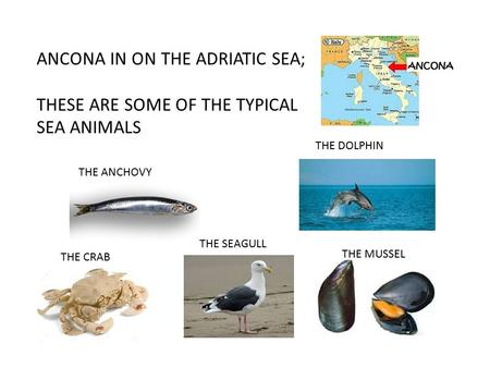 ANCONA IN ON THE ADRIATIC SEA; THESE ARE SOME OF THE TYPICAL SEA ANIMALS THE MUSSEL THE ANCHOVY THE DOLPHIN THE SEAGULL THE CRAB.