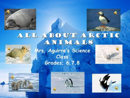 All About Arctic Animals Mrs. Aguirre's Science Class Grades; 6,7,8.
