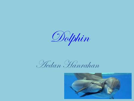 Dolphin Aedan Hanrahan. Where does this animal live? Dolphins live in every ocean. Some species live in rivers.