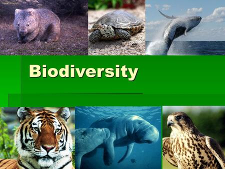 Biodiversity. Biodiversity  The variety of life in an ecosystem.