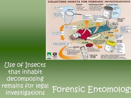 Forensic Entomology Use of Insects that inhabit decomposing remains for legal investigations.