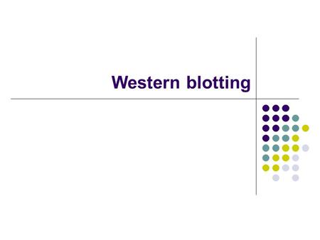 Western blotting. Antibodies in the Immune System Structure: 2 heavy chains + 2 light chains Disulfide bonds 2 antigen binding sites Isotypes: IgG, IgM,