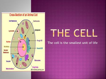 The cell is the smallest unit of life. Our bodies are made up of many cells. They are found in everything that is a living thing. Can you tell me some.