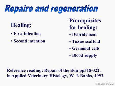 E. Simko WCVM Healing: First intention Second intention Prerequisites for healing: Debridement Tissue scaffold Germinal cells Blood supply Reference reading: