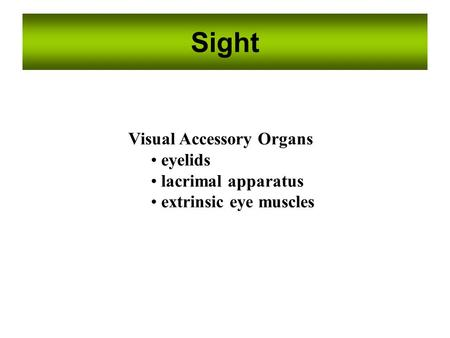 Sight Visual Accessory Organs eyelids lacrimal apparatus extrinsic eye muscles.
