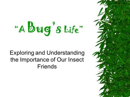 """A Bug's Life"" Exploring and Understanding the Importance of Our Insect Friends."