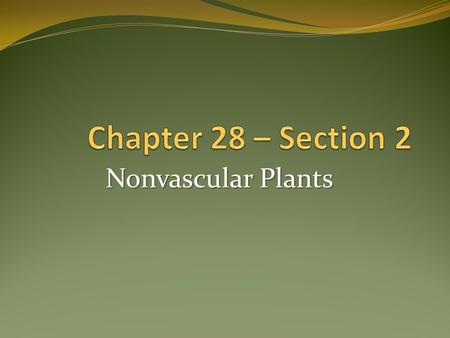 Nonvascular Plants. Most primitive type of plants 3 phyla Together referred to as bryophytes Seedless – produce spores Since they don't have vascular.
