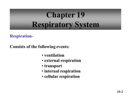 Chapter 19 Respiratory System ventilation external respiration transport internal respiration cellular respiration Respiration- Consists of the following.