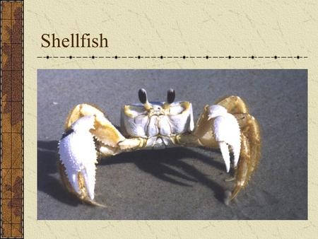 Shellfish. Second largest category of seafood Shells instead of bones Two main groups of shellfish Crustaceans Mollusks.
