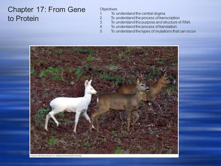 Chapter 17: From Gene to Protein Objectives 1. To understand the central dogma 2.To understand the process of transcription 3.To understand the purpose.