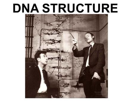 DNA STRUCTURE. DNA Structure DNA is a polymer of nucleotides, each consisting of a nitrogenous base, a sugar, and a phosphate group A-T; C-G made up of.