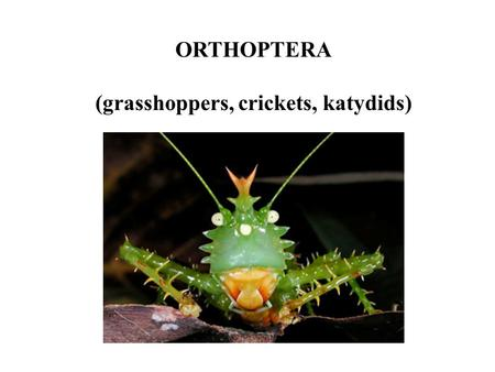 ORTHOPTERA (grasshoppers, crickets, katydids). Orthoptera Number of Species Common names Distinguishing characteristics Other features Typical habitats.