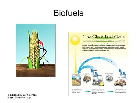 Biofuels Developed by Beth Morgan Dept. of Plant Biology.