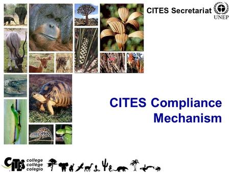 1 CITES Compliance Mechanism CITES Secretariat. 2 Compliance mechanism After much deliberation in a inter-sessional working group, the Parties adopted.