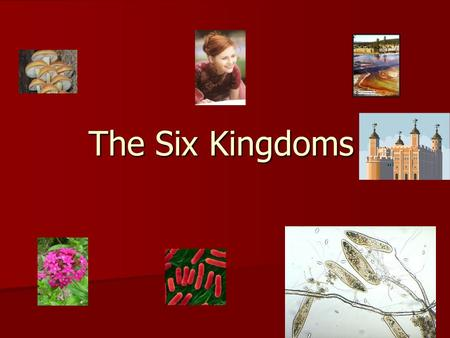 The Six Kingdoms. Introduction 1. Archaebacteria 2. Eubacteria 3. Protists 4. Fungi 5. Plants 6. Animals.