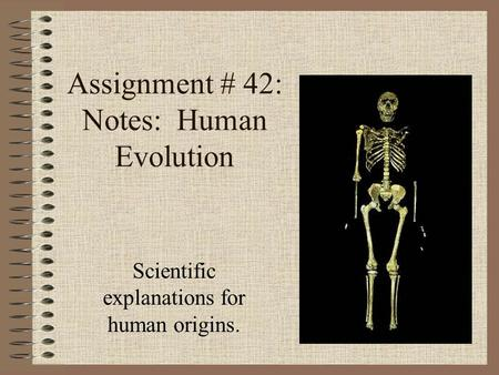 Assignment # 42: Notes: Human Evolution Scientific explanations for human origins.