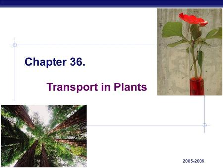 AP Biology 2005-2006 Chapter 36. Transport in Plants.