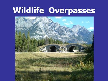 Wildlife Overpasses. Ungulates Deer sp., Elk, Moose  Mountain goat, Bighorn sheep  Pronghorn  Carnivores Weasel,  Pine marten, Fisher  Striped.