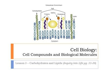 Cell Biology: Cell Compounds and Biological Molecules Lesson 3 – Carbohydrates and Lipids ( Inquiry into Life pg. 31-36 )