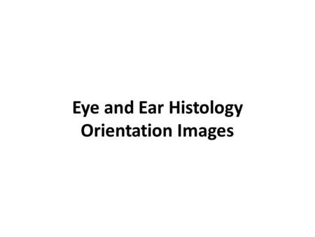 Eye and Ear Histology Orientation Images