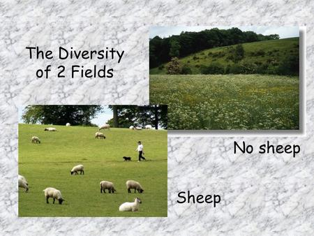 The Diversity of 2 Fields No sheep Sheep. What we will study 1.Difference between the diversity of vegetation in the 2 fields 2.Differences between the.