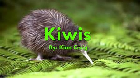 KIWIS Kiwis By: Kian Craig. THERE IS TWO TYPES OF KIWIS This is the one I am talking about Not this one.