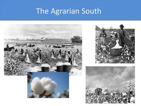 The North The Agrarian South. With the growth of textile mills in the North, the demand for cotton grew rapidly. Long-staple cotton was easy to process.