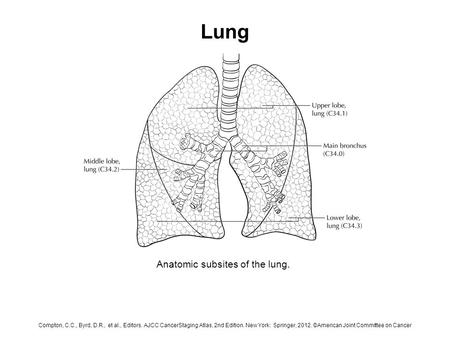 Lung Anatomic subsites of the lung. Compton, C.C., Byrd, D.R., et al., Editors. AJCC CancerStaging Atlas, 2nd Edition. New York: Springer, 2012. ©American.