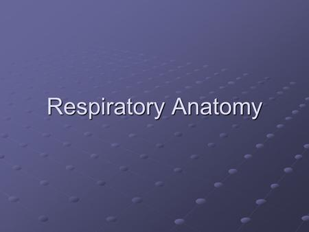Respiratory Anatomy. Interesting Facts The surface area of the lungs is about the same size as a tennis court You lose about ½ L of water a day through.