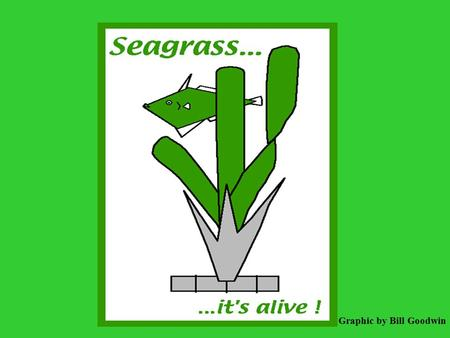Graphic by Bill Goodwin. When you're boating in the shallow waters of the Florida Keys or the backcountry, stay clear of the many seagrass flats.