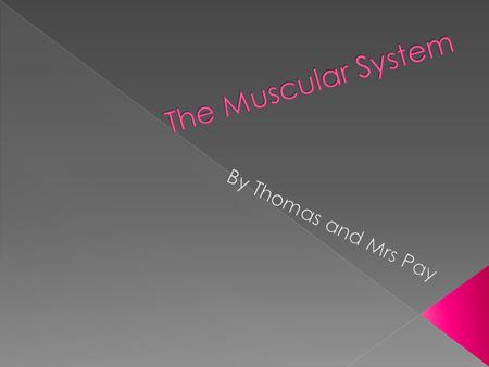 There are three main functions of the muscular system. 1. Warmth – your muscles warm you up by shivering 2. Movement – the muscles make your bones move.
