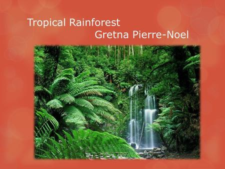 Tropical Rainforest Gretna Pierre-Noel. Climate  Warm and wet environment  Rains about 100-400 inches per year  70-80 ⁰ F and at night it drops down.