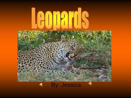 By: Jessica Habitat Usually found near mountain sides or beside rivers Almost everywhere in Africa Mostly nocturnal Ground and in trees Often hide their.