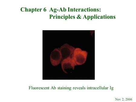 Chapter 6 Ag-Ab Interactions: Principles & Applications Nov 2, 2006 Fluorescent Ab staining reveals intracellular Ig.