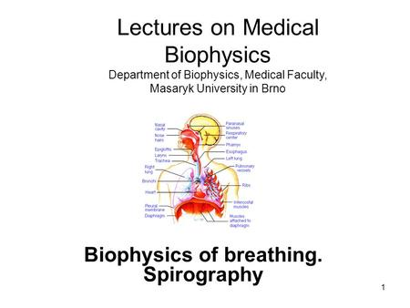1 Biophysics of breathing. Spirography Lectures on Medical Biophysics Department of Biophysics, Medical Faculty, Masaryk University in Brno.