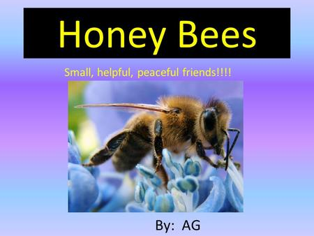 Honey Bees Small, helpful, peaceful friends!!!! By: AG.