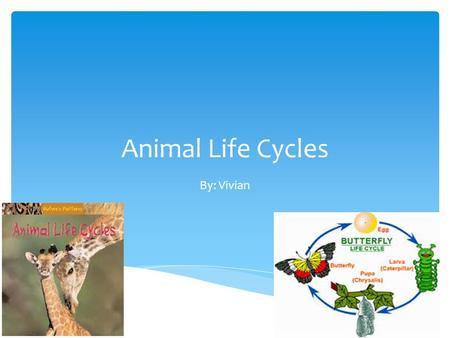 Animal Life Cycles By: Vivian. They are the path of…  Being young  Having young  Short life  Long life Why do we have life cycles?