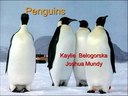 Penguins Kaylie Belogorska Joshua Mundy. Appearance Most penguins are black and white. Penguins have short, stiff feathers and fat to keep them warm.